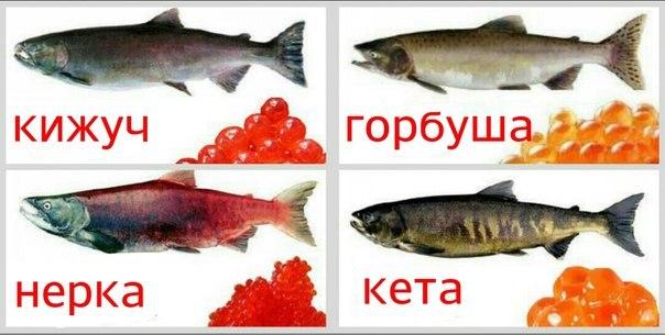 из какой рыбы самая вкусная икра красная